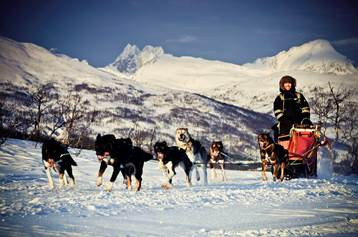 A group from a Hurtigruten ship riding a sled pulled by huskies