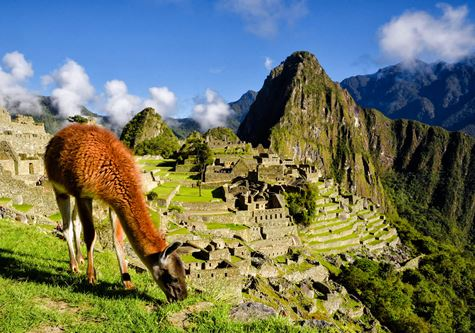 Cox & Kings Treasures of Peru Solo Tour - Llama in front of Machu Picchu near Cusco, Peru. Machu Picchu is a Peruvian Historical Sanctuary