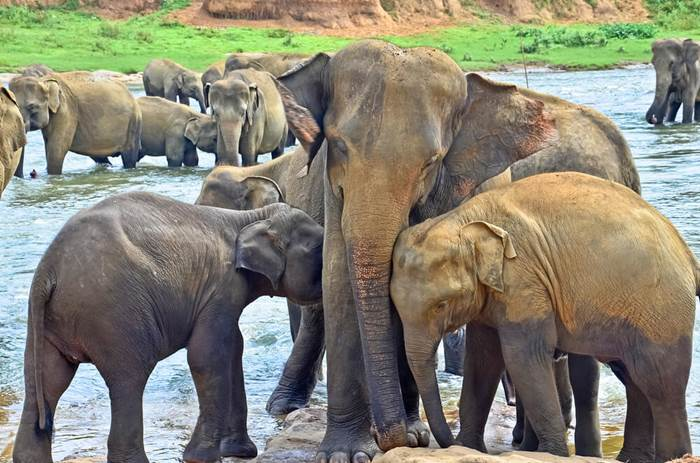 Elephants at the Wilpattu National Park in Sri Lanka - Cox & Kings Splendours of Sri Lanka